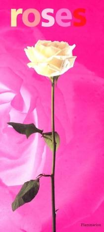 Roses - HervéCaron