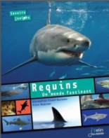 Requins, un monde fascinant - AlexandrineCivard-Racinais