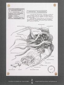 Vampyroteuthis infernalis : un traité, suivi d'un rapport de l'Institut scientifique de recherche paranaturaliste - VilémFlusser