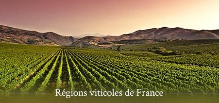Découverte des régions viticoles