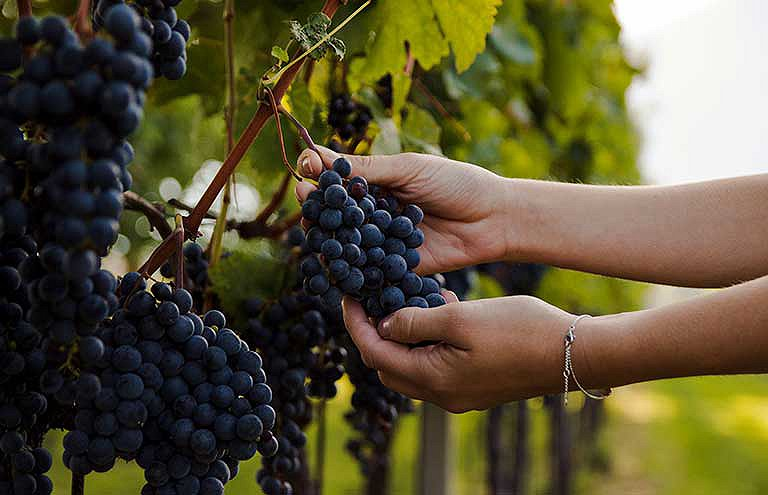 viticulture biologique en France