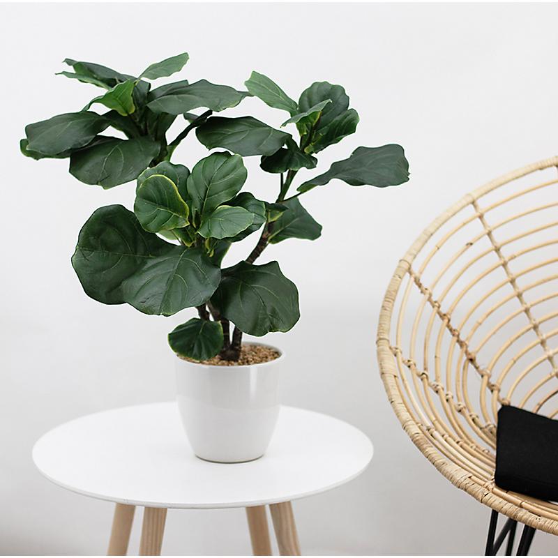 Ficus lyrata artificiel en pot céramique blanc - H63cm