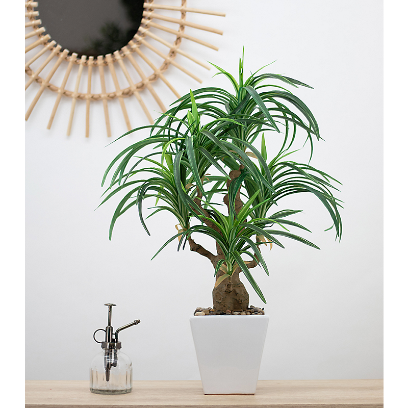 Dracaena artificiel en pot céramique carré blanc - H63cm