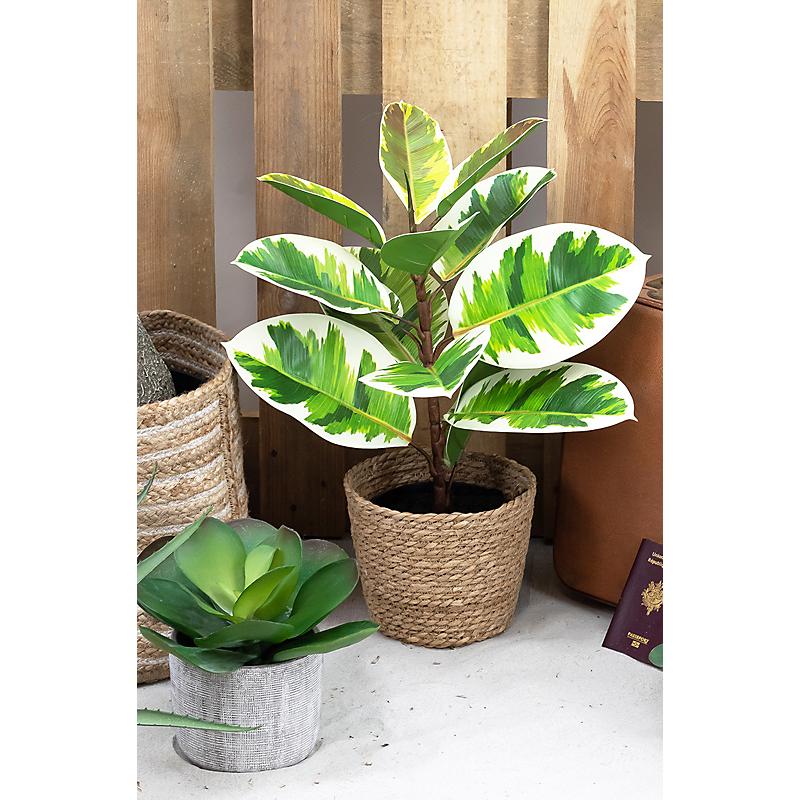Plante verte caoutchouc - H63cm