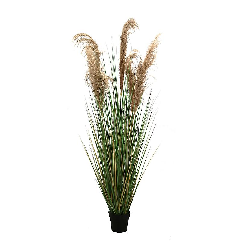 Herbe de la pampa graminées semi-naturelles - H150cm