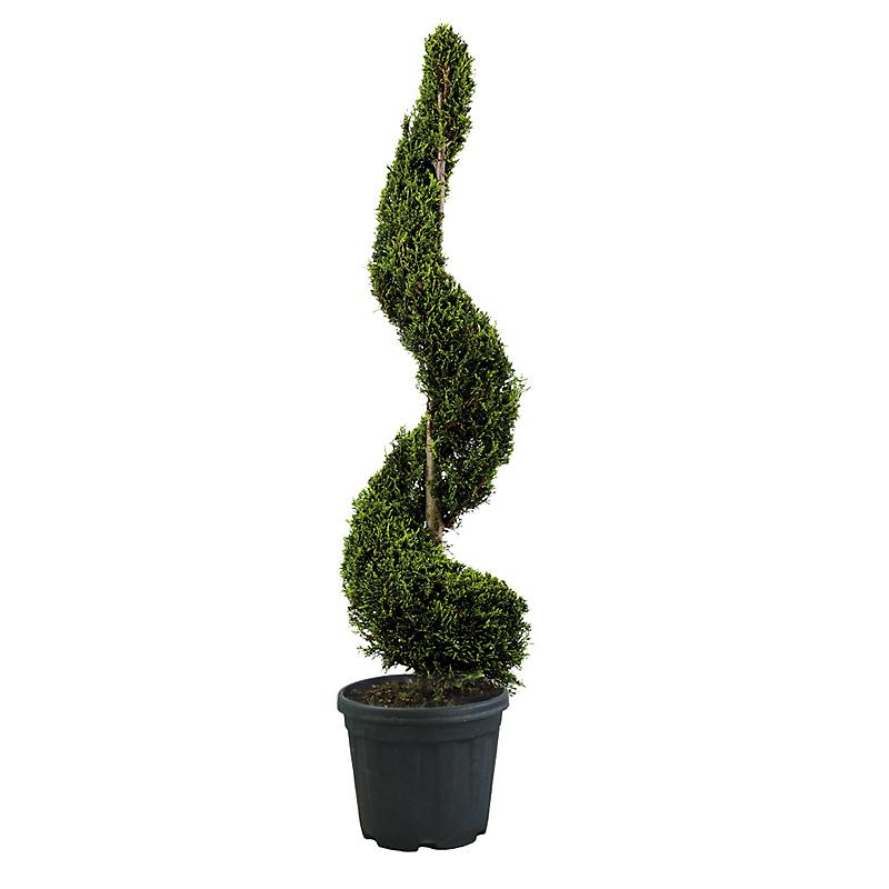 achat arbre plante et jardin pas cher e leclerc. Black Bedroom Furniture Sets. Home Design Ideas