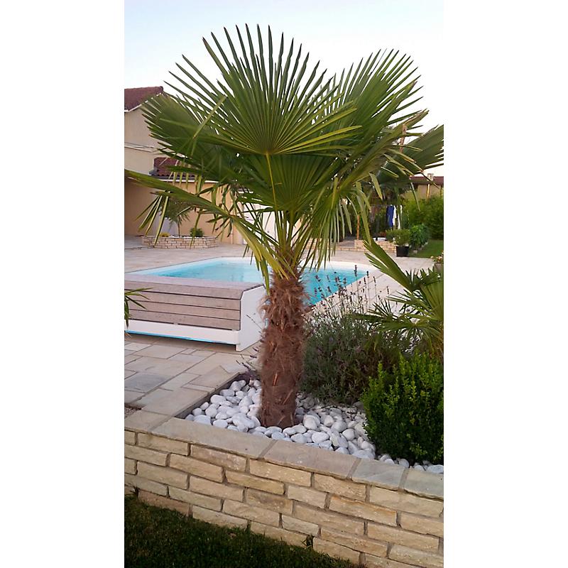 Achat Arbre Plante Et Jardin Pas Cher E Leclerc