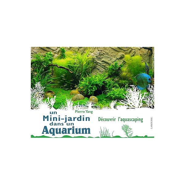 Un mini-jardin dans un aquarium : découvrir l\'aquascaping