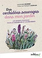 des-orchidees-sauvages-dans-mon-jardin-les-bonnes-pratiques-pour-les-accueillir-et-les-proteger